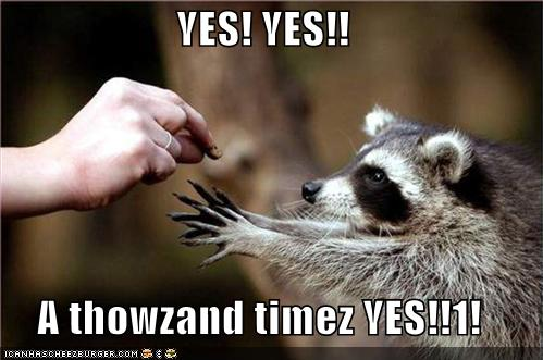 funny-pictures-racoon-yes